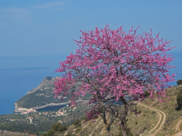 Photo Gallery Kefalonia Griekenland